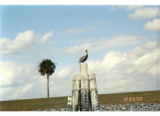 sahalee, pelican, florida, off grid, boat, sahaleeoffgrid